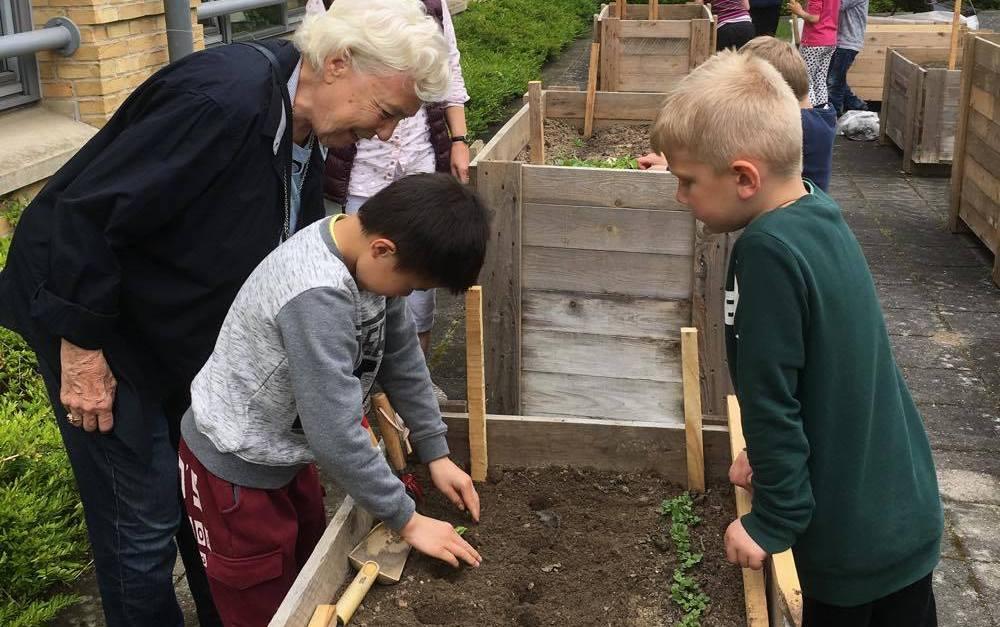 Børn fra Harreskovskolen dyrker grønsager sammen med beboere i Demenshjemmet Bakkegården. Foto: Haver til Maver